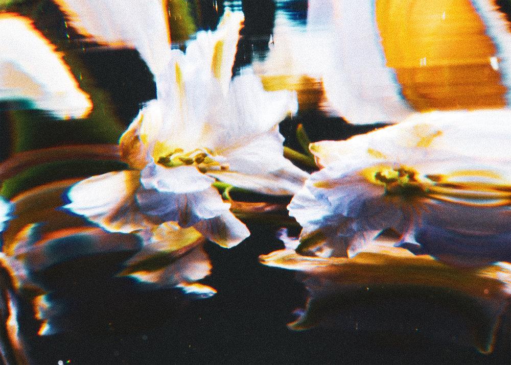 FLOWER_PHOTO_3.jpg