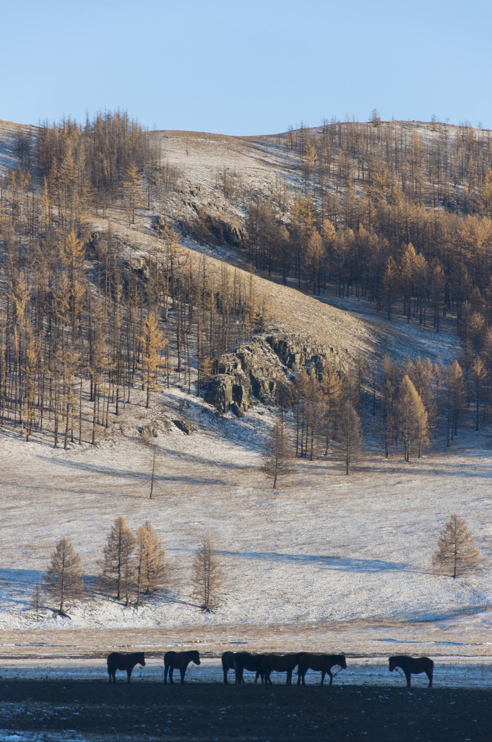 mongolie_30_4.jpg