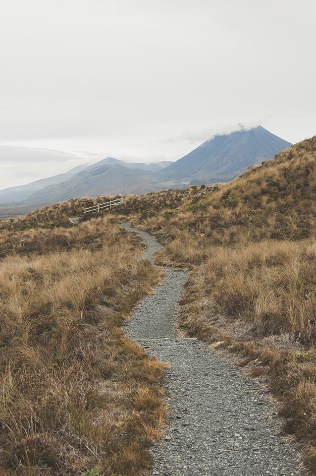 NZ_57.jpg