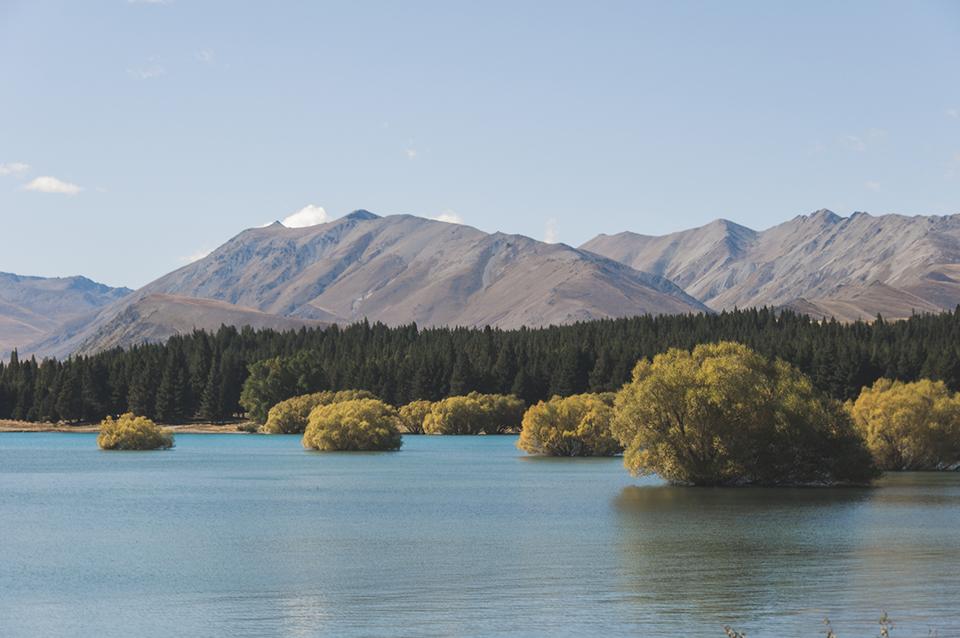 NZ_29.jpg