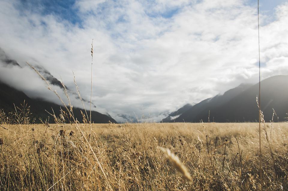 NZ_17.jpg