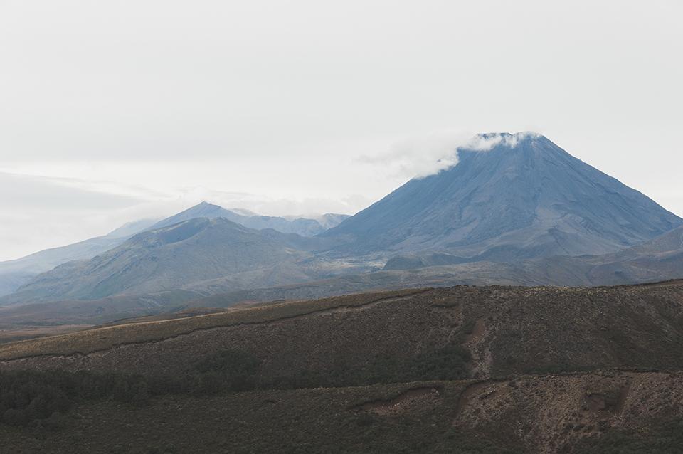 NZ_56.jpg