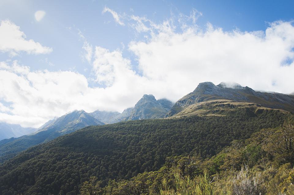 NZ_38.jpg