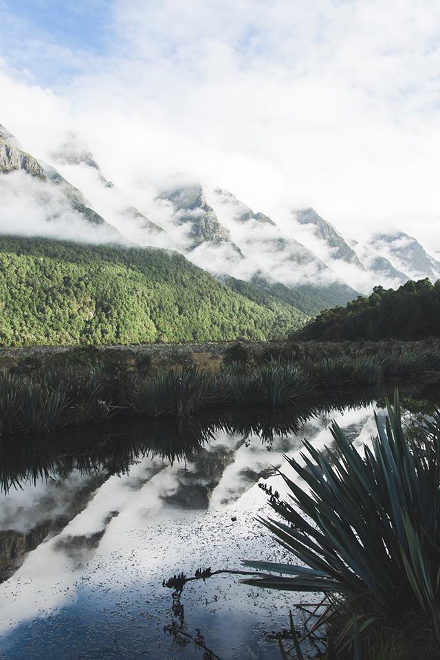NZ_18.jpg