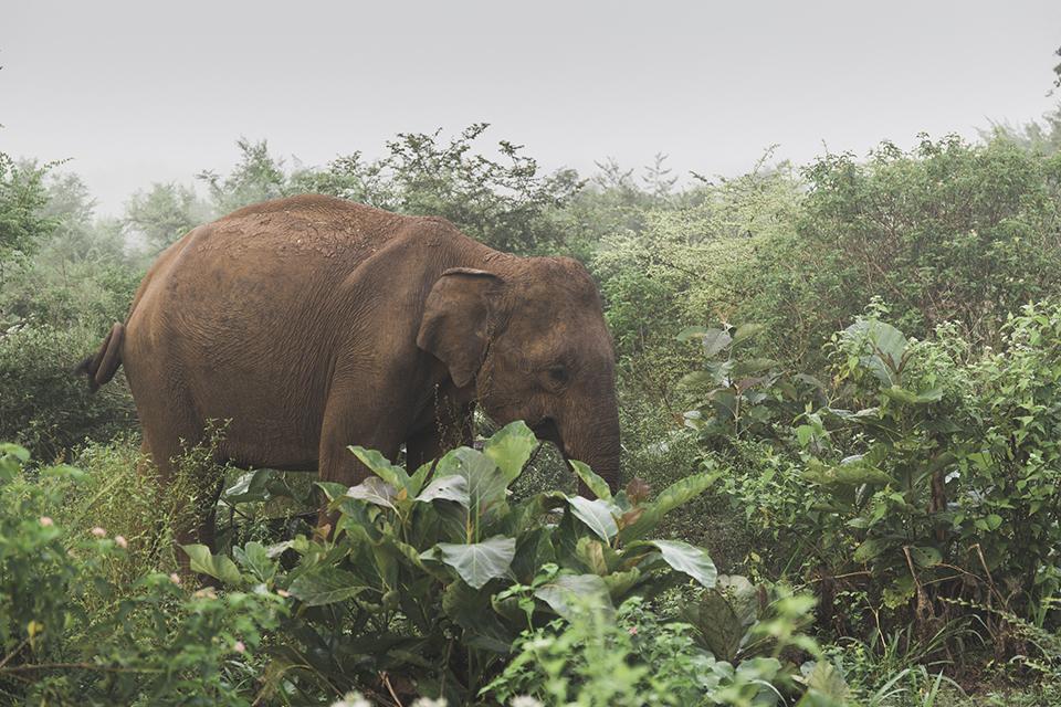 srilanka_27.jpg