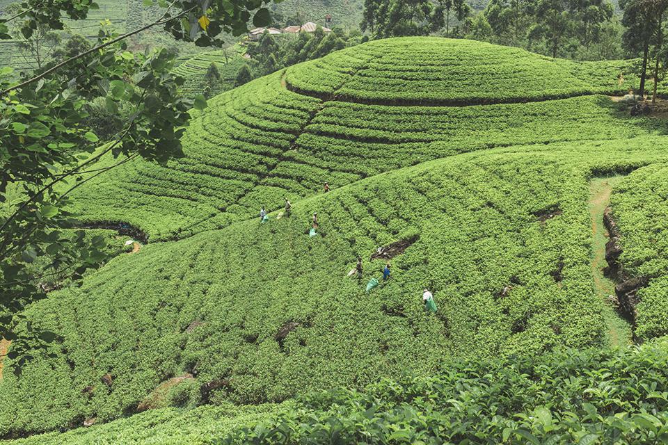 srilanka_30.jpg