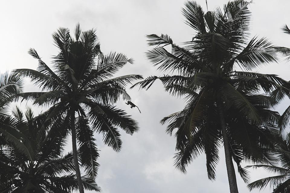 srilanka_26.jpg