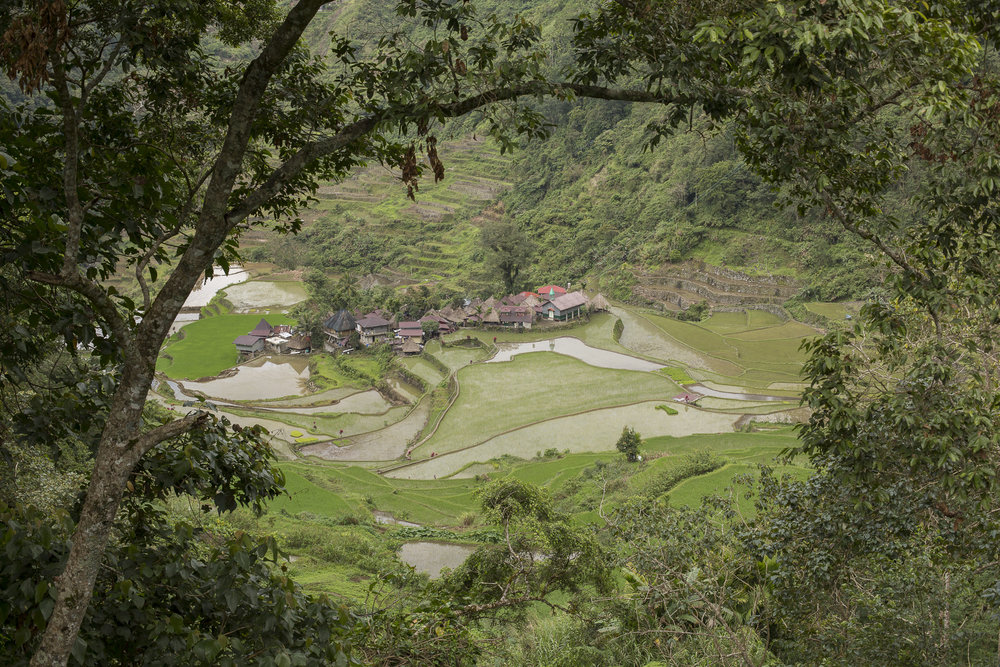 Philippine_2785.jpg