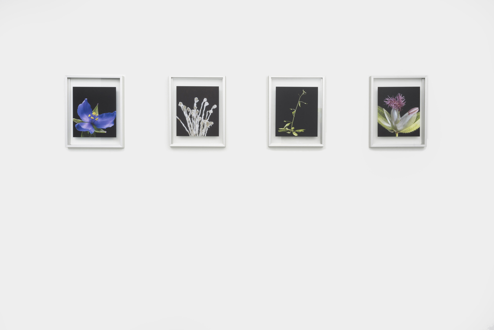 To Threptikon, 2014. Pigment prints on glass. Edition of 3 + 2APs 4 parts, 14 x 11 inches each