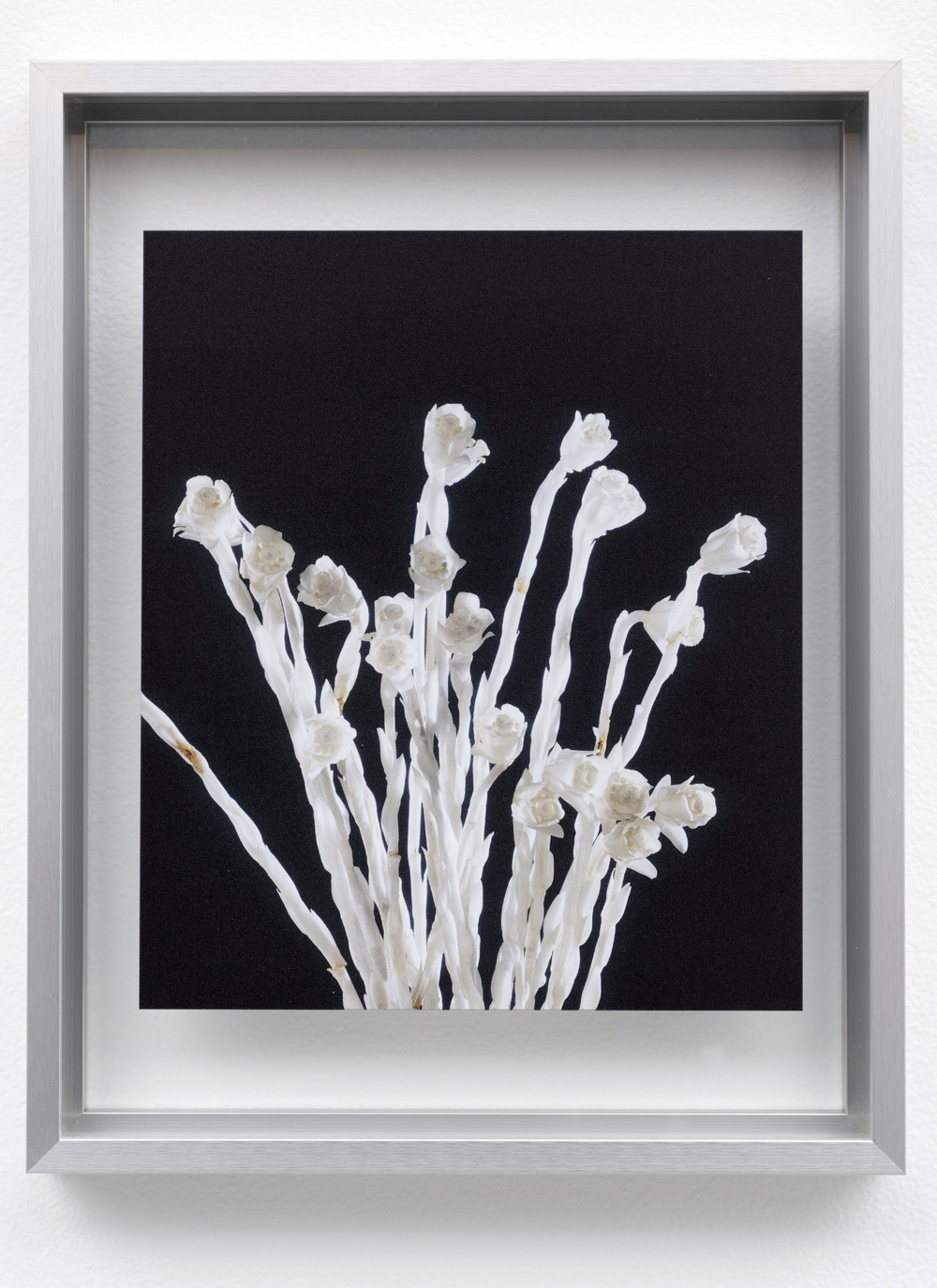 Indian Pipe (Monotropa uniflora) from the to Threptikon series, 2014. Courtesy of the Archives of Rudolph and Leopold Blaschka and the Harvard Ware Collection of Blaschka Glass Models of Plants