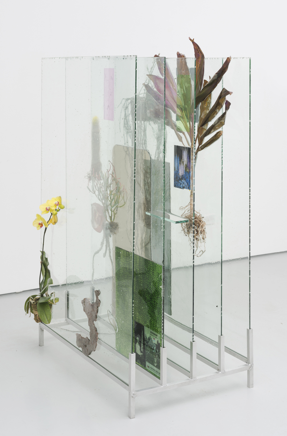 The Museum Archive (dedicated to Edward Steichen's Delphiniums, MOMA 1936), 2014. Glass, resin, plants, beam splitter glass, photo gels, photographic prints and film, 56 x 36 x 22 inches