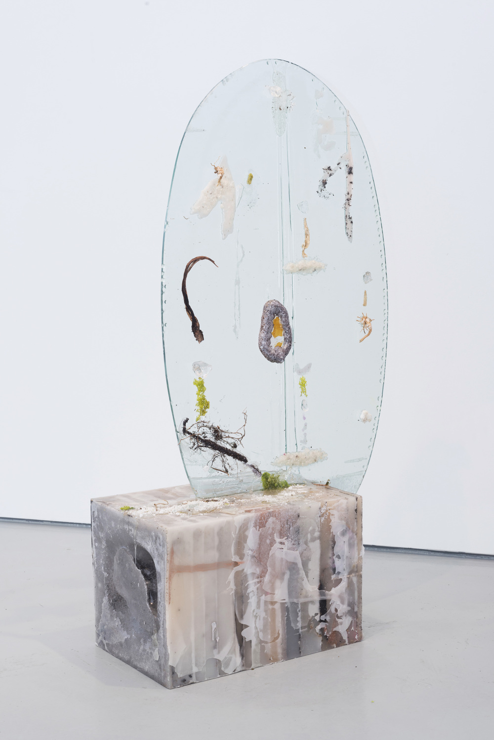 Ellipse with Nitrogen Fixers and Snake Plant Buds, 2013-2014. Glass, wax, resin, plant materials, rock salt, 49 x 26 x 12 3/4 inches