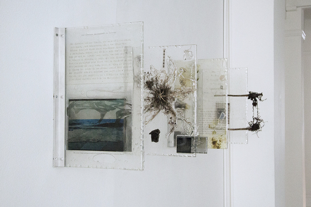 """""""The Distance Between Things,"""" 2013. Plant, resin, paint, celluloid, photographic transparencies, petrified wood, lenses, mirrors. Ea. 18 x 12 inches"""