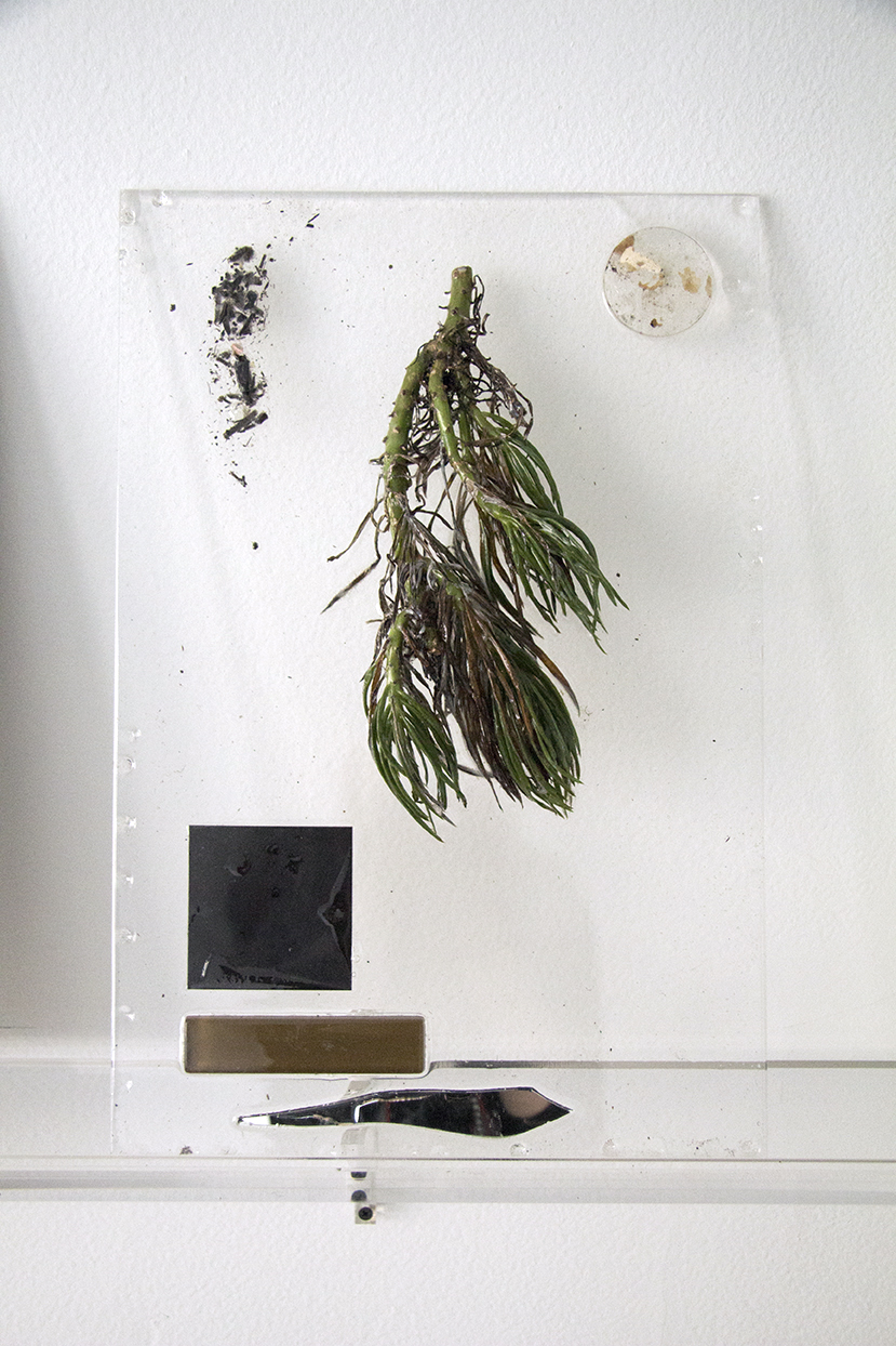 """""""The Distance Between Things,"""" 2013. Plant, resin, paint,acrylic, celluloid, photographic transparencies, petrified wood, lenses, mirror. 18 x 12 inches"""