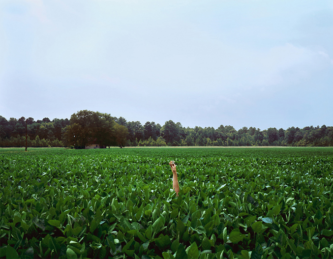 Harriet Tubman's Birthplace, Archival Pigment Print, 30 x 38 inches, 2009
