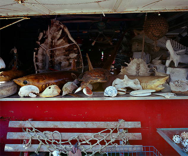 Sea Life, USA, Gold Rope, Archival Pigment Print, 26 x 38 inches, 2009