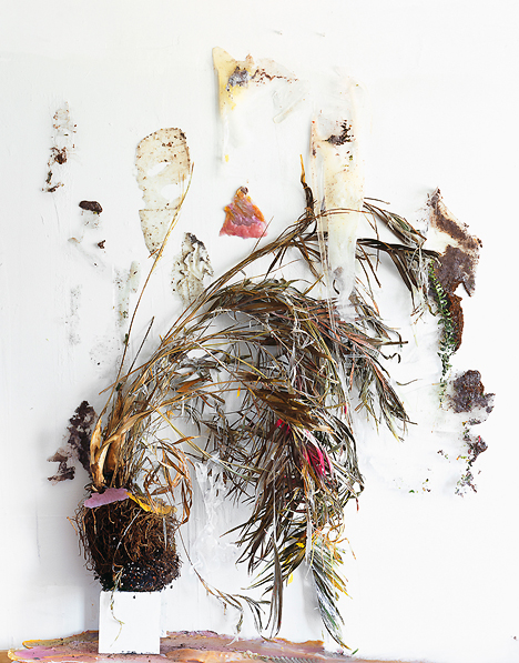 Desiccation of an Arecaceae (Fold), 2012, Archival Pigment Print, 38 x 46 inches, 5/5 + 2 AP