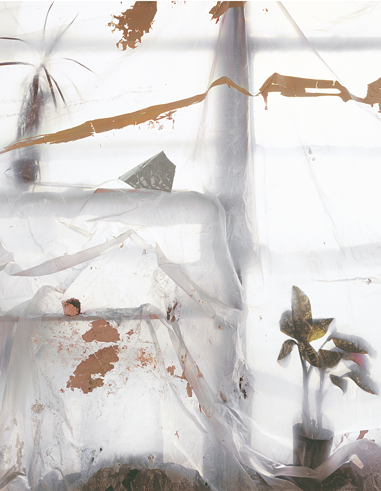My Dieffenbachia Plant with Tarp (Protection), 2011, Archival Pigment Print, 30 x 36 inches