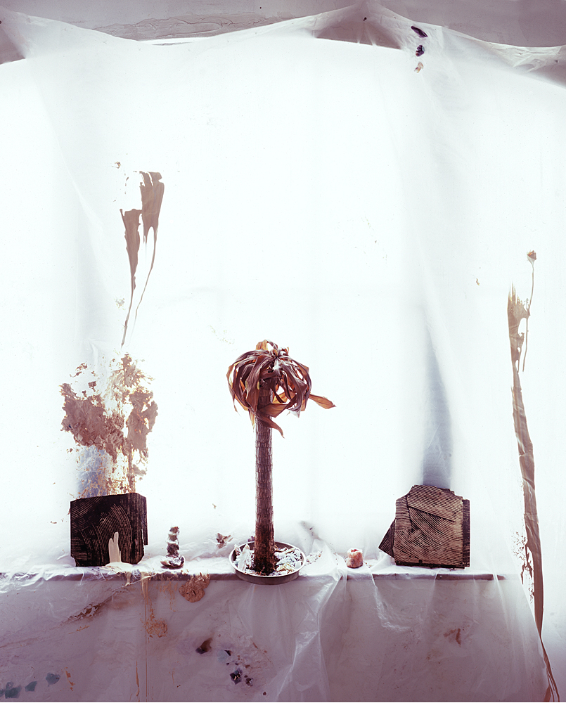 Dead Palm Burnt by the Sun, 2011,Archival Pigment Print, 30 x 35 inches