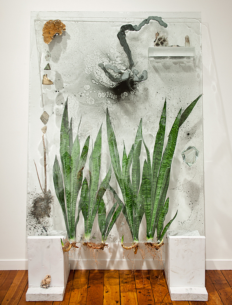 Black Smoke Monster with Snake Plants, 2011, Glass, resin, plants, mixed media, 36 x 58 x 16 inches