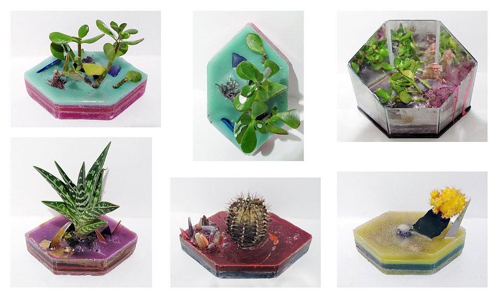 Miscellaneous hexagon wax pieces with plants, 2011