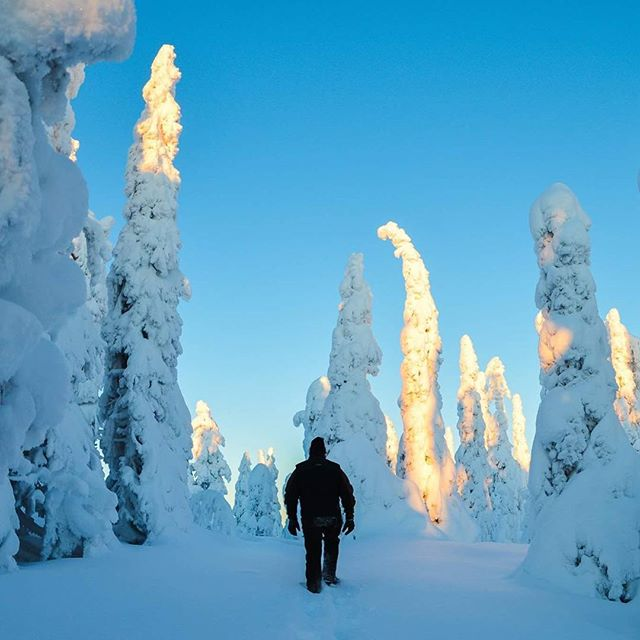 Our #paradise in #kuusamo. #winter #winterwonderland #snow #tree #outdoors #outdoorlife #travel #naturephotography #traveller #visitkuusamo #visitfinland #suomiretki #getoutthere #adventureculture #adventureisoutthere #adventuretravel #youradventureofthelifetimebeginstoday #visitmyig #adventureapes