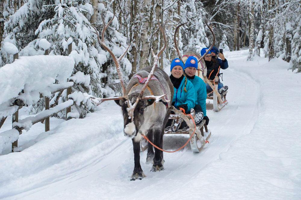Reindeer safari in Kuusamo