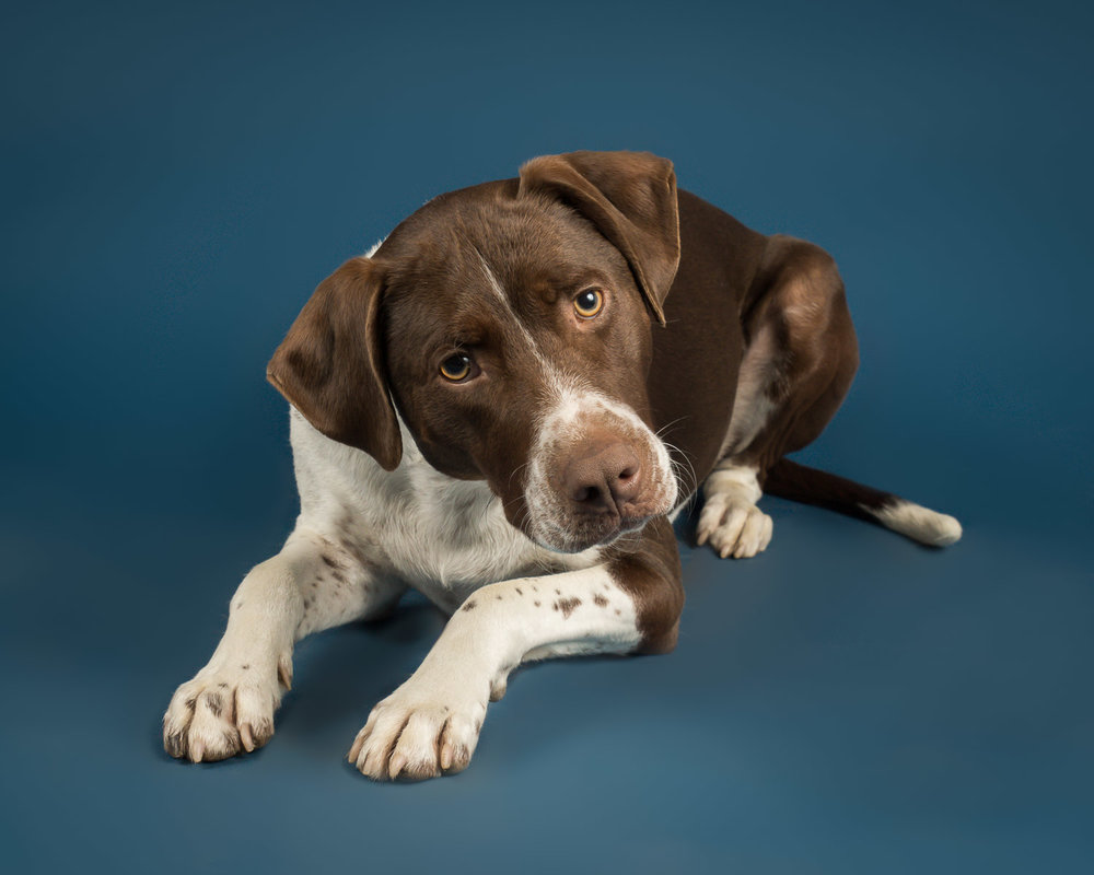 Capture a playful portrait of your pup for your home