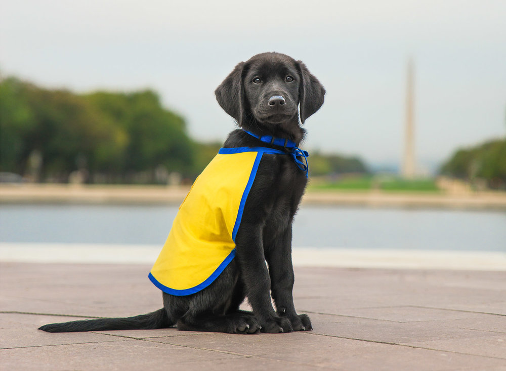 Canine Companions for Independence Photography