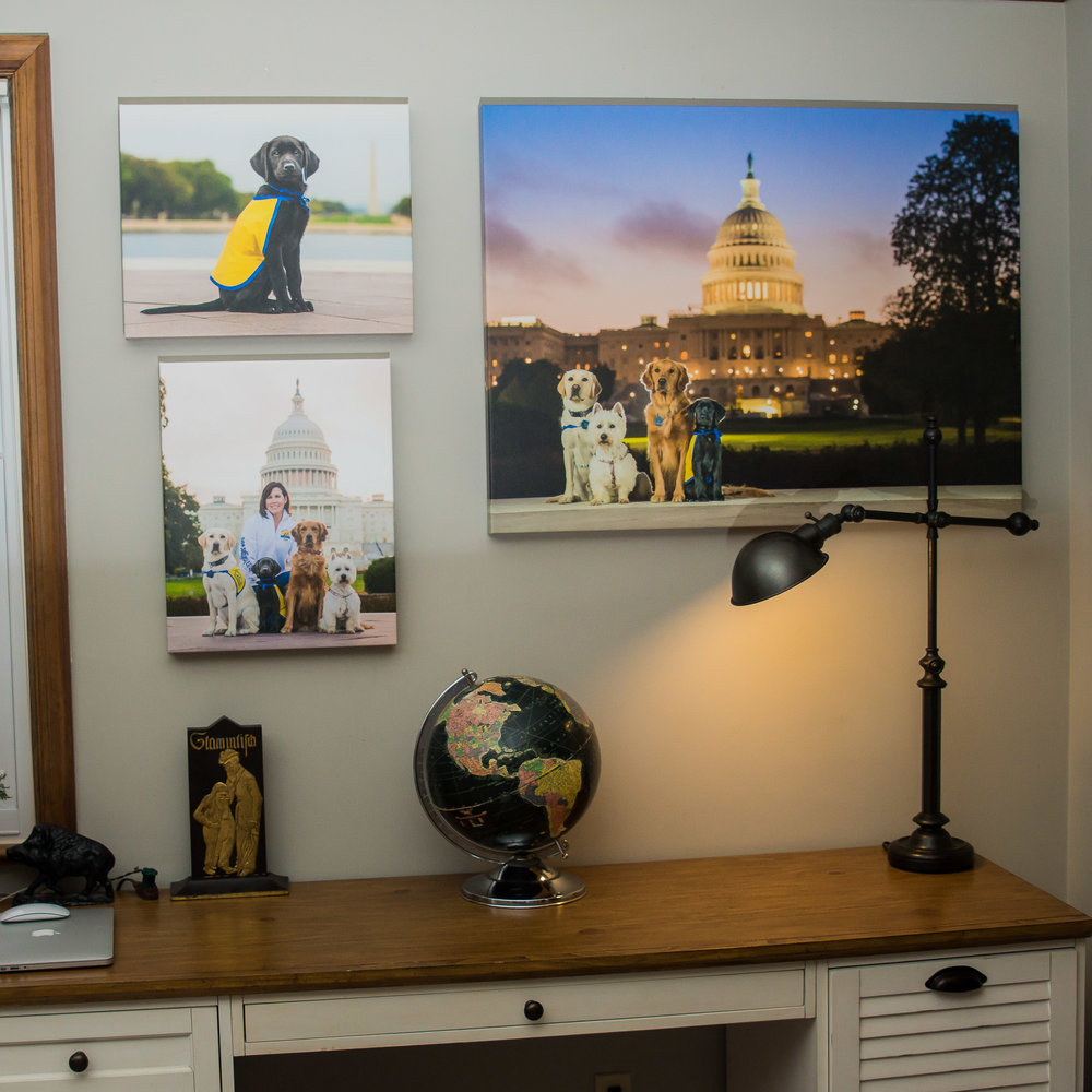 "These canvas prints are some of our favorites, especially the sunrise in front of the US Capitol Building. The large print is a 30"" x 40"" pet portrait while the smaller ones are 16"" x 20"" portraits."