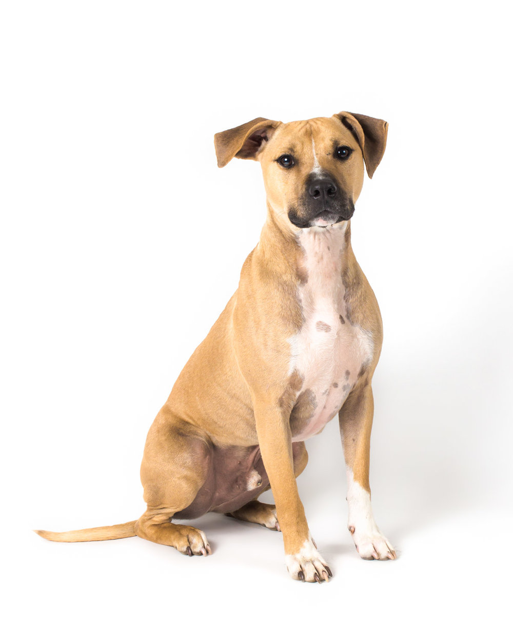 Have you dog photographed on our new white backdrop