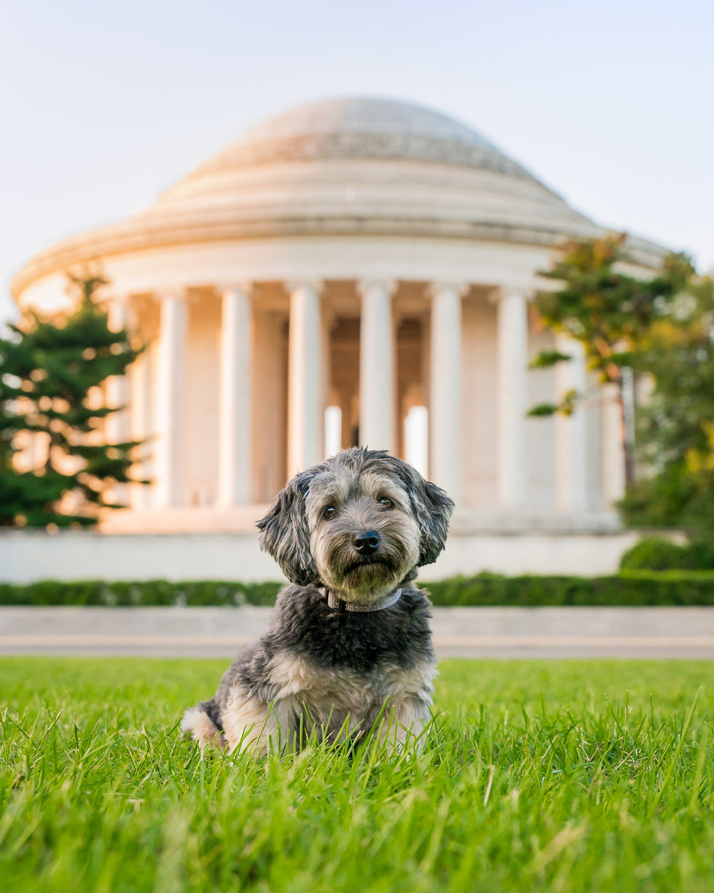 Pablo looks so cute while sitting near the backside of Jefferson Memorial