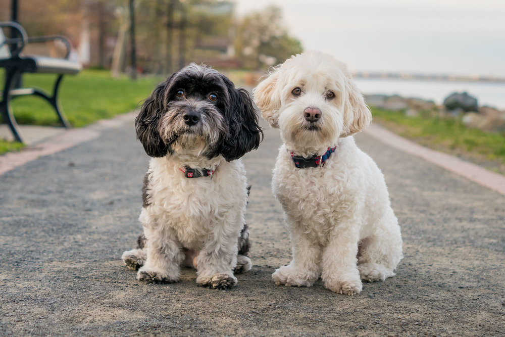 Ben and Sammy love living in Alexandria Virginia with their parents.
