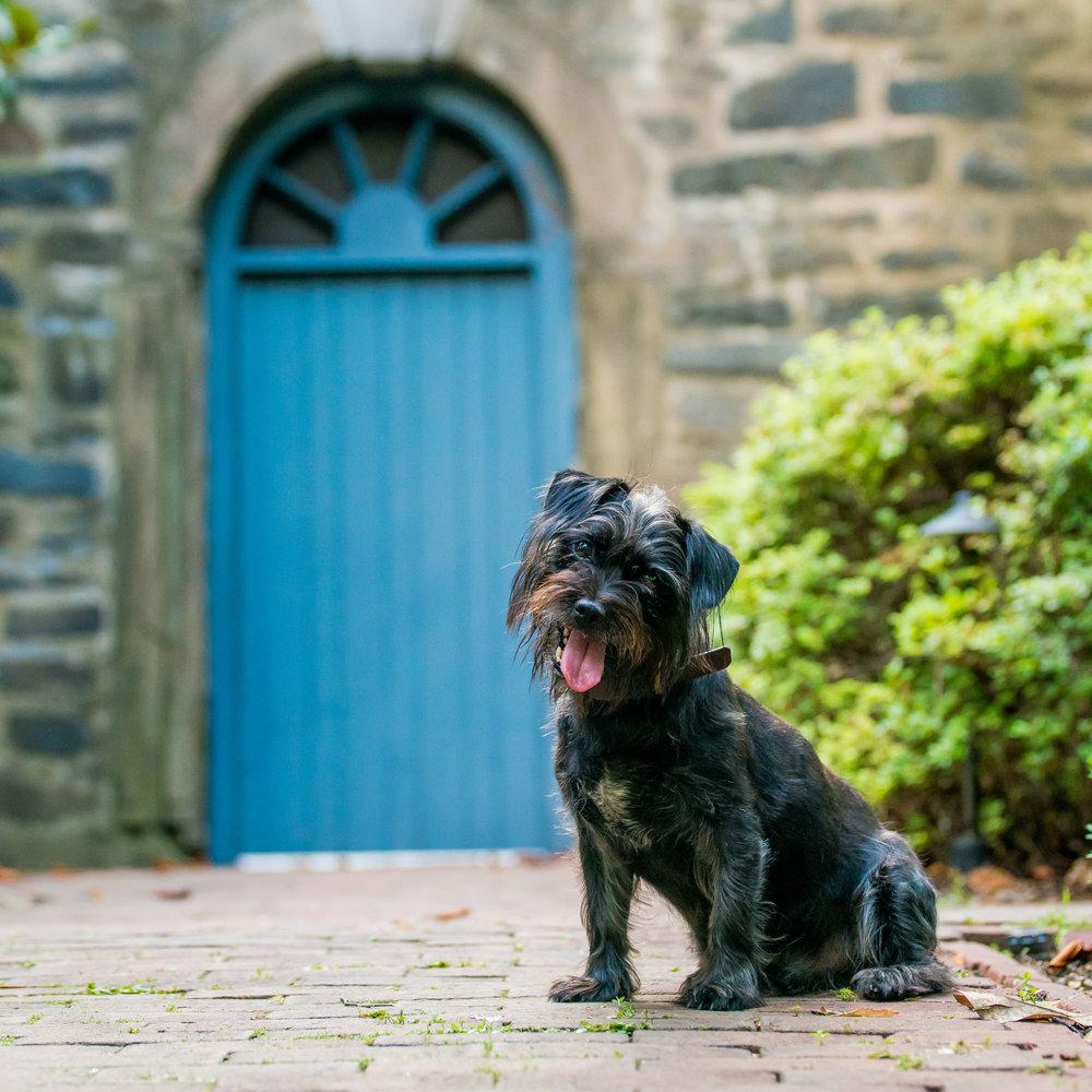 Small Dogs of Alexandria Virginia Pet Photography-16.jpg