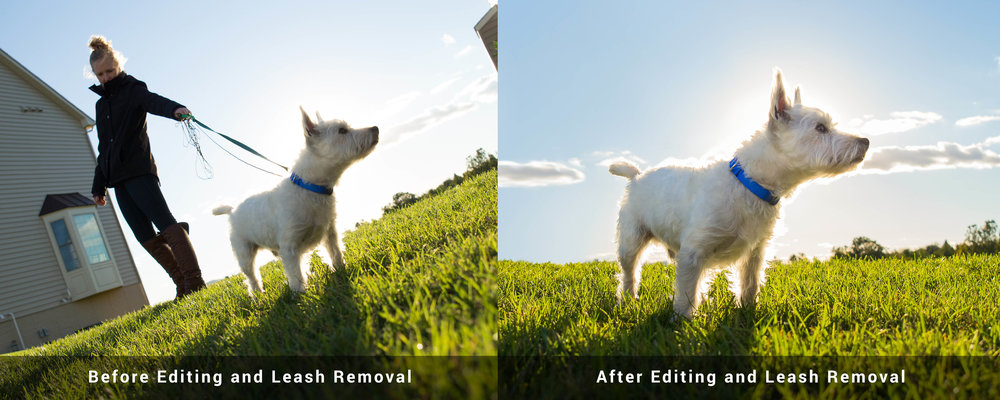 In this image Wyatt was on a leash that Heather was holding. As you can see we just photoshopped the leash and Heather out of the final image.