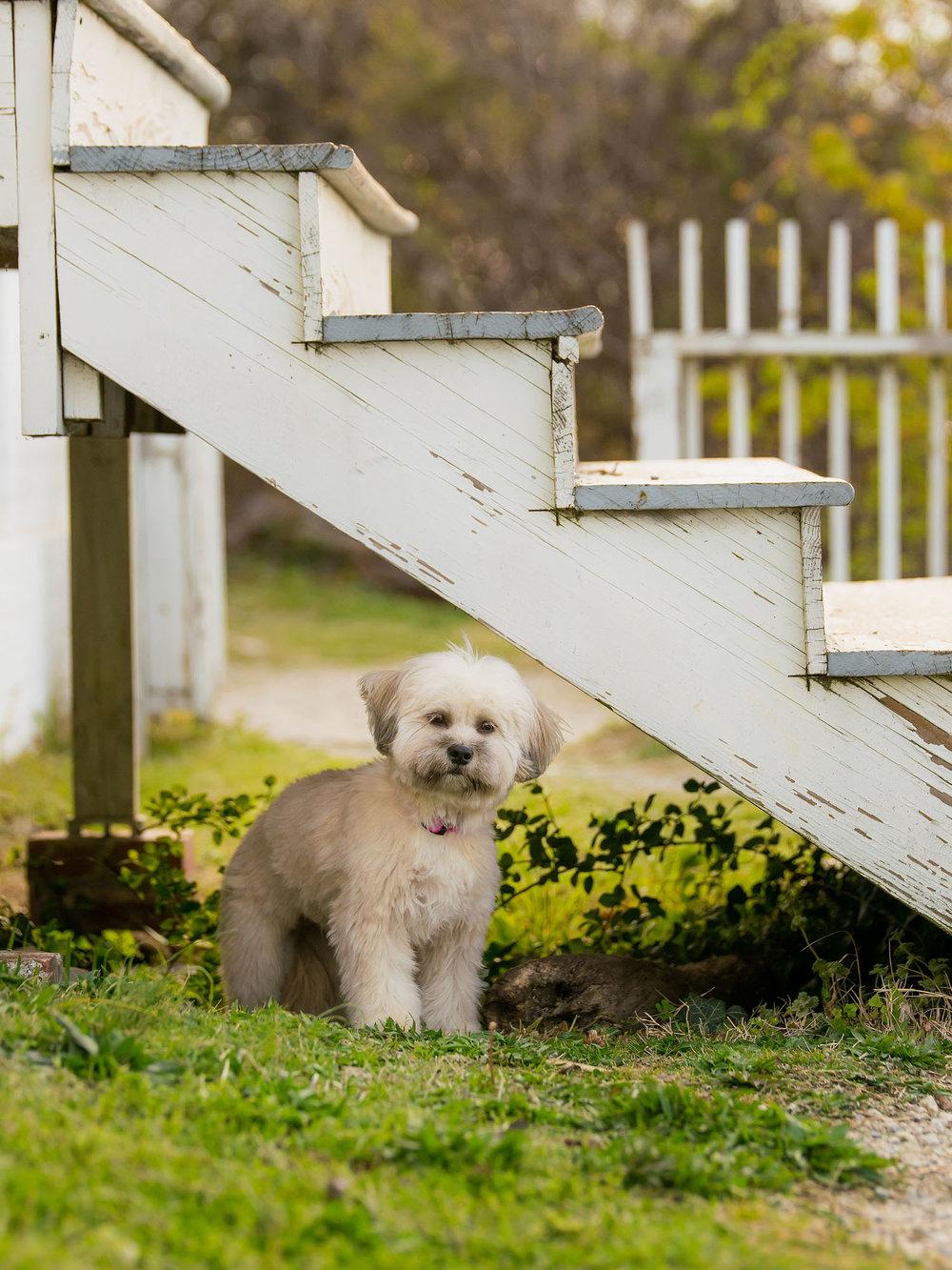 Small Dogs of Alexandria Pet Photographer-2.jpg