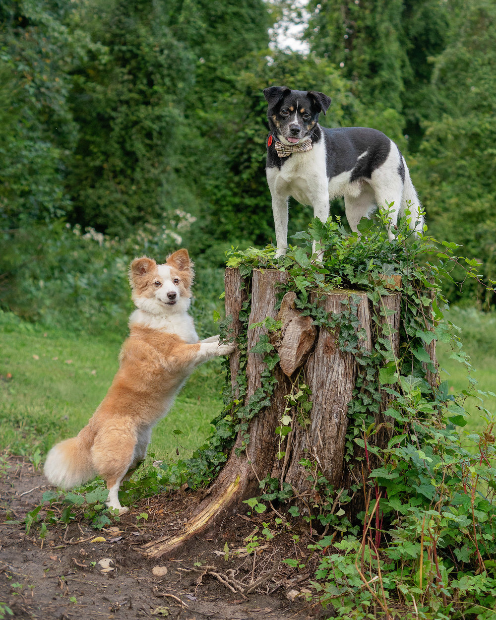pet photography - Photoshop Dogs Together.jpg