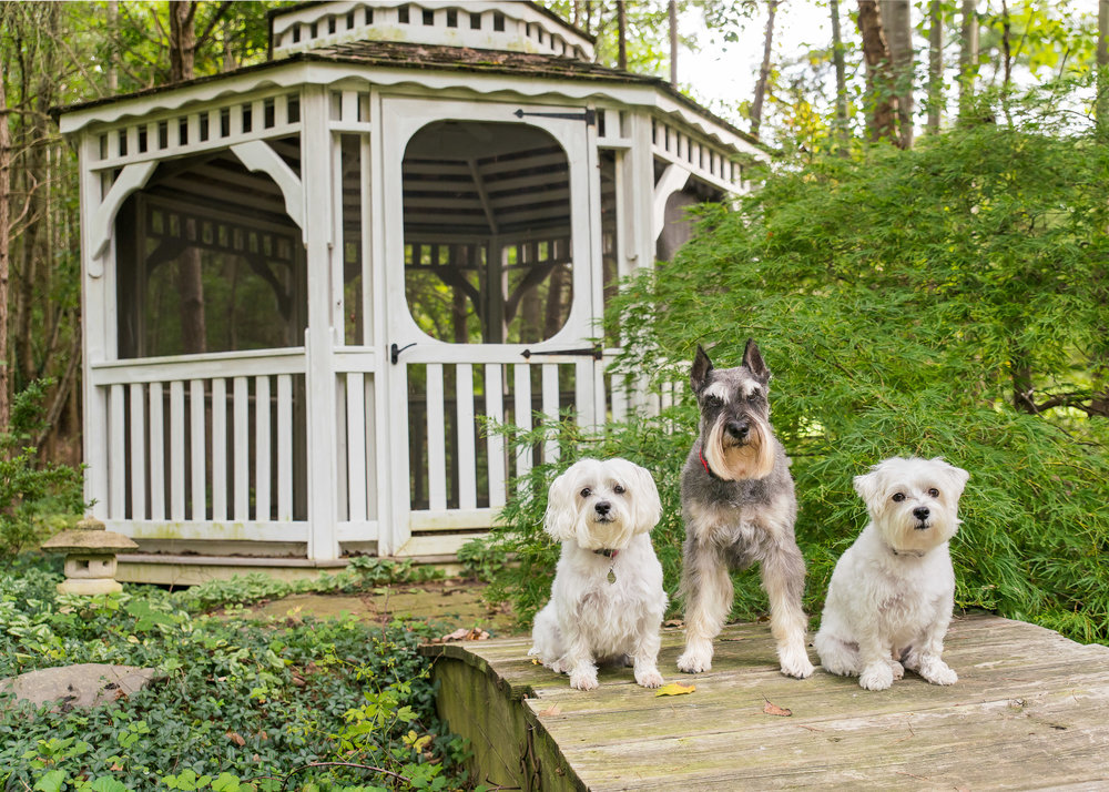 pet photography dc - Dogs At Home.jpg