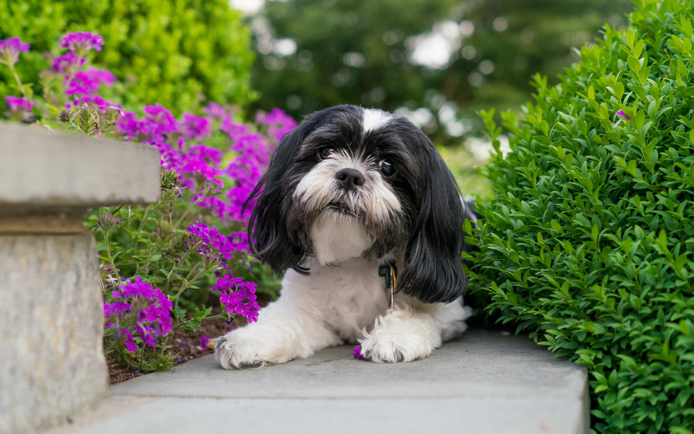 Don't the flowers just add the perfect pop of color to this dog portrait?