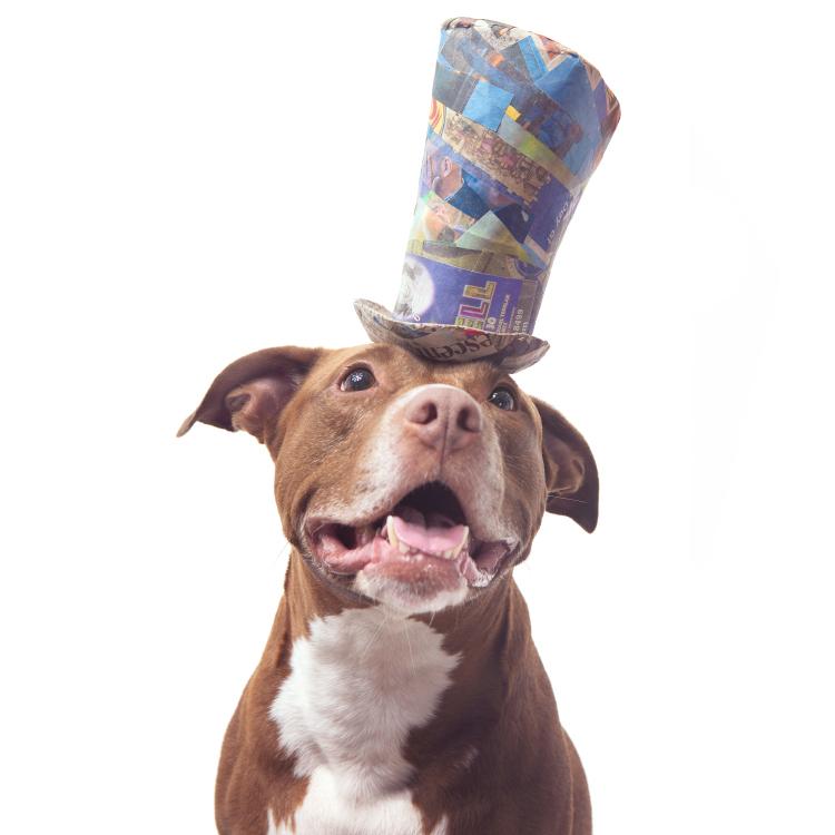 whimsical dog portrait pitbull wearing top hat.jpg