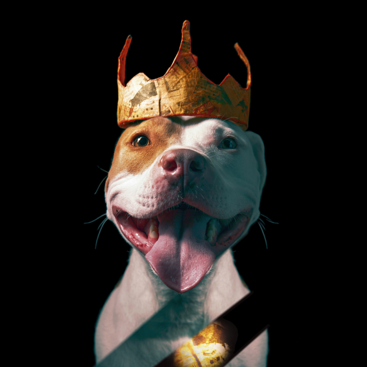 whimsical dog photo pitbull wearing paper crown.jpg