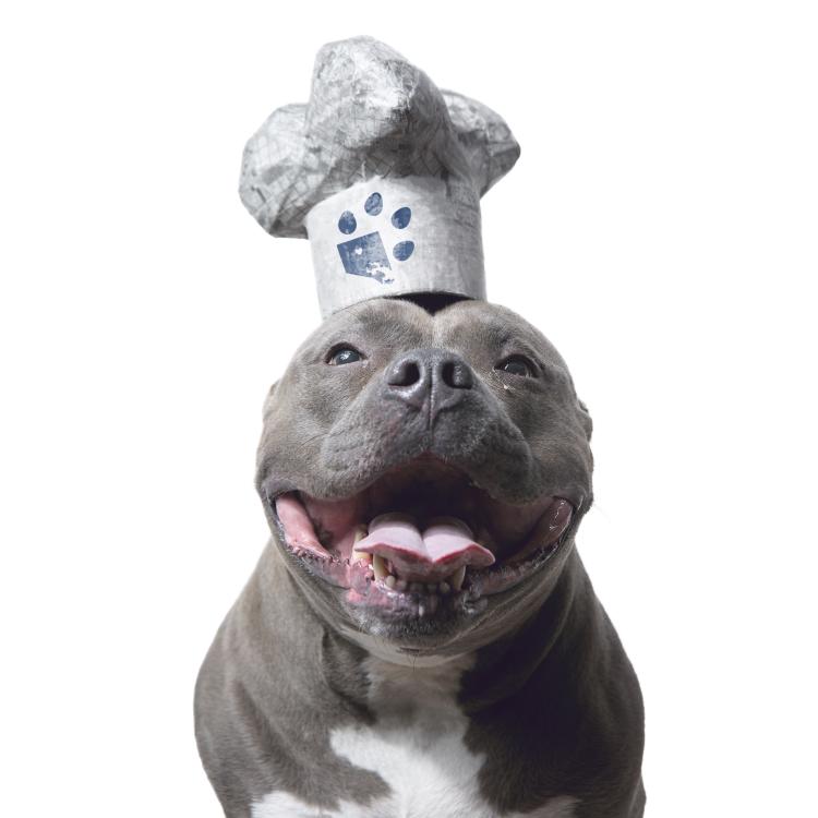 creative dog photo pitbull white chef hat.jpg