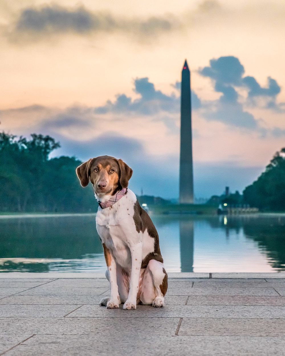 Washington Monument Sunrise in the Background with A Dog Sitting.jpg