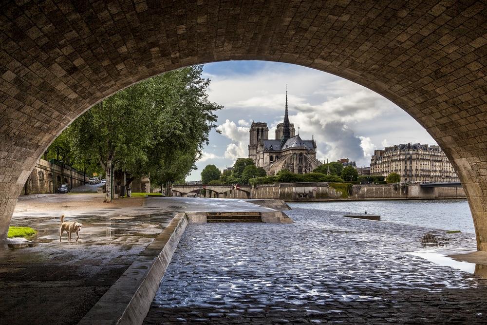 Chien et Notre Dame