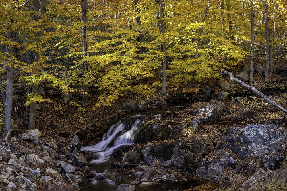 Catskill's Creek