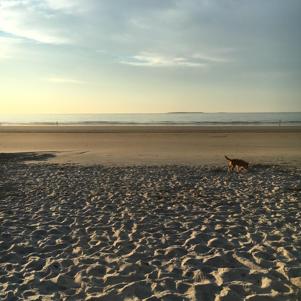 My dog, Lou, on the beach.