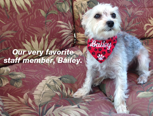 Bailey.jpg