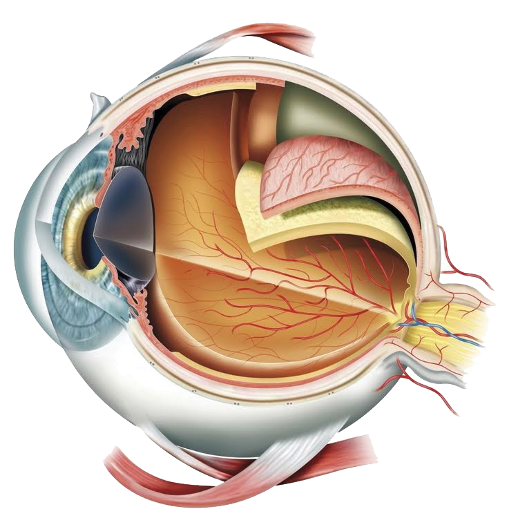 Visual System — Opsis Therapeutics