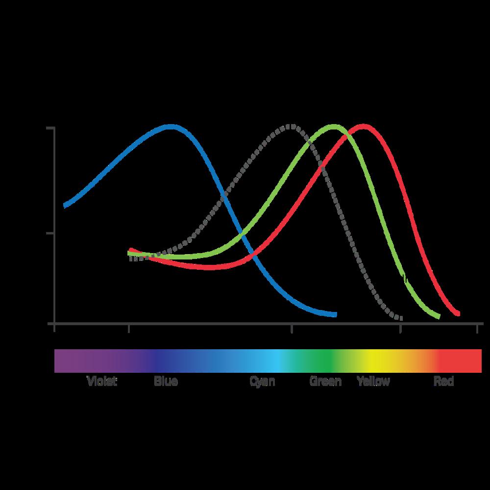 Photoreceptors Opsis Therapeutics