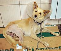 Митяй после сложнейшей операции.